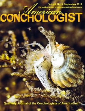 American Conchologist Vol 43 No 3 Conchological